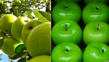 Green Apples - large